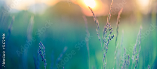 Fotografia Abstract sunset banner field landscape of grass meadow on warm golden hour sunset or sunrise time