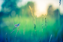 Dream Meadow Sunset. Nature Closeup Beautiful Summer Meadow Background. Inspirational Nature Closeup. Magical Wonderful Stunning Spring Butterfly Relax Tranquil Nature Macro. Blurred Bokeh Trees Sky