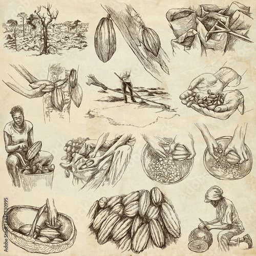 Cocoa harvesting and processing. Agriculture. An hand drawn illustrations on old paper.