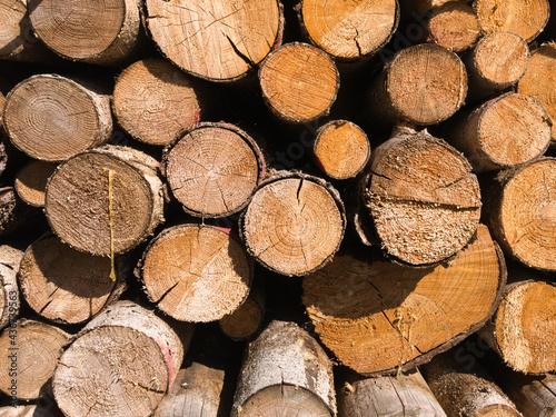 Photo Frontal-Ansicht eines Stapels mit frisch geschlagenen Bäumen