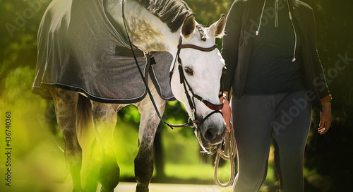 Fotografie, Obraz A beautiful white horse with a gray mane in a gray blanket walks with a horse breeder on a sunny summer day among the green foliage of trees