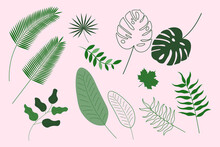 Leaves Set Isolated. Plant Elements Collection. Monstera, Palm Leaf And Other. Vector Illustration