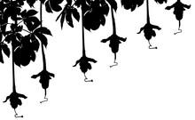 Fruits Du Baobab, Pains De Singe