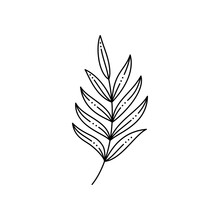 Tropical Palm Leaf In A Trendy Minimalist Liner Style. Vector Illustration
