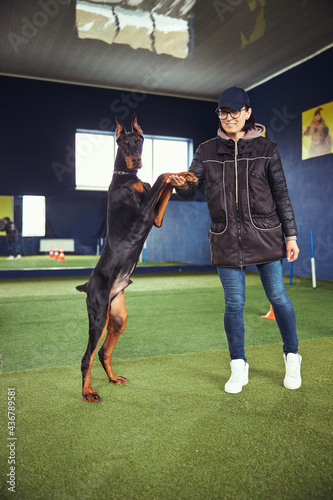 Obraz na plátne Dog standing on his hind legs supported by a handler