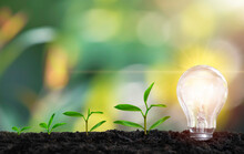 Saving Energy Light Bulb With Light And Tree Growing On Stacks On Nature Background. Saving, Accounting And Financial Concept. Technology For Saving Electric Power And Energy Use Ecology Idea Concept