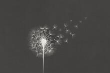 Illustration Of White Dandelion Clock Flower On Black Background