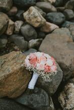 Mushroom On The Rocks
