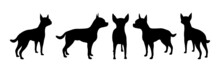 Set Of Dogs Vector Silhouette Illustration Isolated On White Background