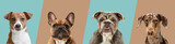Art collage made of funny dogs different breeds on multicolored studio background in neon light.