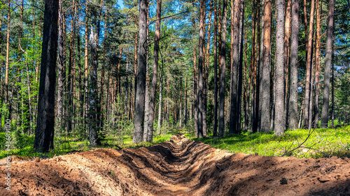 Fotografia, Obraz Fire-fighting forest plowing