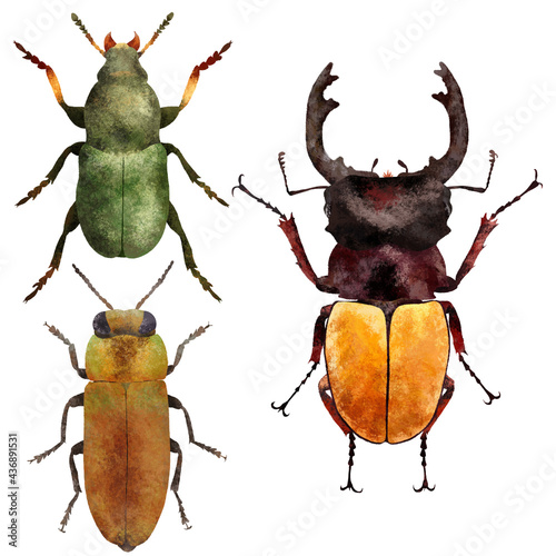 Photo Naturalistic insects board, set of colorful beetles insect isolated on white background