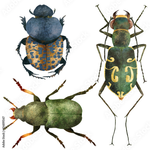 Stampa su Tela Naturalistic insects board, set of colorful beetles insect isolated on white background