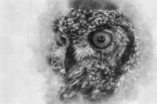Beautiful Owl With Intense Eyes And Beautiful Plumage Hand Drawing Effect With Pencils