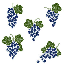 Grapes Set. Collection Icons Grapes. Vector