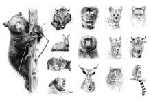 Hand Drawn Set Of 14 Animals, Sketch Graphics Monochrome Illustration On White Background