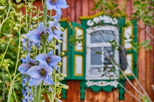 Beautiful blue delphinium flowers Fototapet