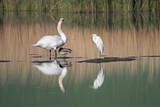 Fototapeta Fototapety do łazienki - Ptactwo wodne na stawie
