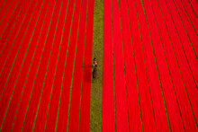 Aerial View Of A Man Walking Along Red Long Textile Stripes Spread Out On A Field Near Narsingdi, Township, Dhaka, Bangladesh.