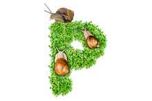 The Letter P Is Made Of Grass And Snails