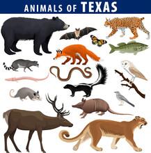 Vector Set - Animals Of Texas: Black Bear, Puma, Lynx, Deer,  Skunk, Bat, Bass Fish, Armadillo, Fox, Mockingbird, Barn Owl, Garter Snake, Opossum, Salamander, Racoon And Butterfly