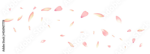 Fotografering Color Peach Petal Vector White Background. Purple
