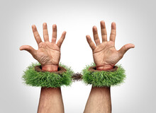 Garden Work Concept And Being A Slave To Your Yard Chores As Mowing Grass And Backyard Landscaping Job As Trapped Hands With Handcuffs Or Hand Cuffs Shaped As Green Rolls Of Sod Or Turf And Roots
