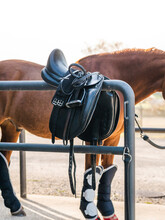 Purebred Horse Standing In Outdoor Stable Near Barrier With Saddle