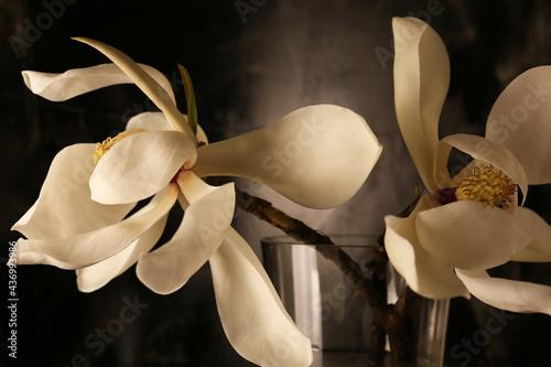 Fotografía Still life con profumati fiori di magnolia recisi in vaso