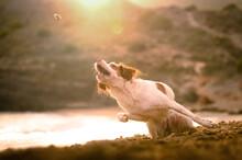 Active Dog Hunting On Sandy Coast