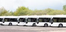 Long White Busses