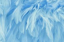 Blue Pastel Bird Feathers Pattern Texture Background.