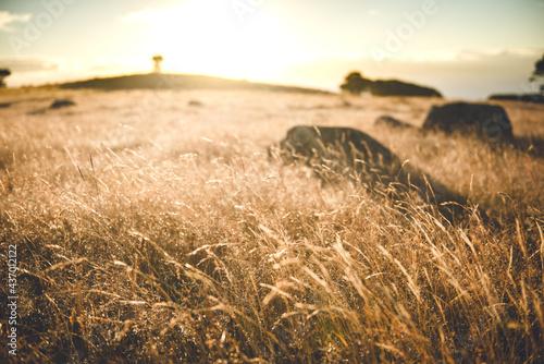 Billede på lærred Sunrise in Stony Batter Historic Reserve, Waiheke Island, Auckland, New Zealand