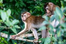Two Monkeys On Green Tree Branch Inside Tropical Rainforest.