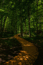 Forest Road Made Of Yellow Bricks, Dark Shadows Under The Trees With Some Sunlight, Winding Down Into The Forest