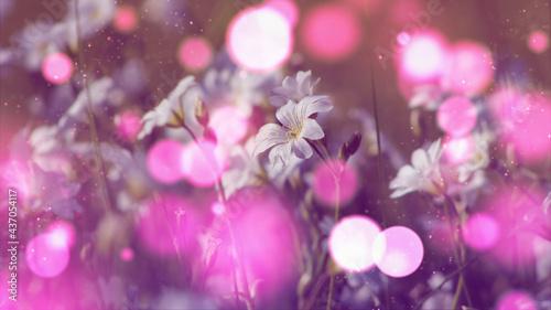 Białe kwiaty polne z bliska i efektem bokeh