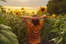 Sunny Beautiful Picture Of Young Cheerful Girl Holding Hands Up In Air And Looking At Sunrise Or Sunset. Stand Alone Among Field Of Sunflowers. Back Up View. Enjoy Moment. Harvest Time