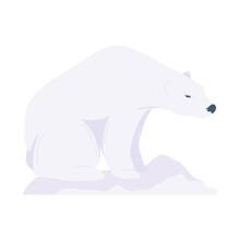 Polar Bear Animal
