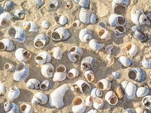 Closeup Of Snail Shells On Sand. Natural Background
