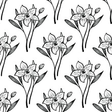 Narcissus Or Lily Summer Flower Black White Seamless Vector Pattern In Hand Drawn Style. Lily Isolated Flowers, Garden Summer Blossom Organic Seamless Pattern. Lilies Blossom Black White Floral Design
