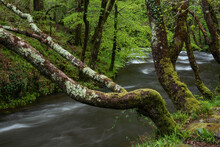 Stunning Spring Landscape Image Of Watrersmeet In Devon England Where Two Rivers Meet To Form One Large Powerful River