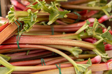 Red Rhubarb For Sale At Farmer's Market