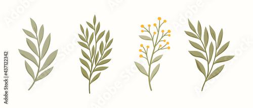 Fotografiet Set of vector floral elements