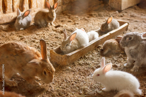 rabbits on the farm in the aviary Fototapete