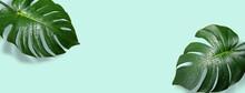 水滴のついたモンステラの葉の背景テクスチャー
