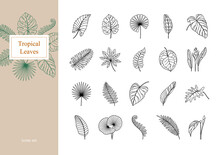 Set Of Exotic Tropical Leaves.