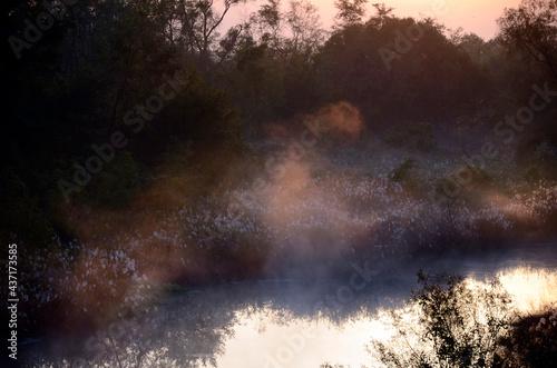 Fotografering 川の夜明け