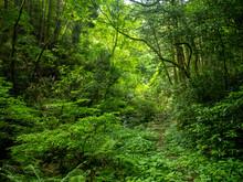 新緑の快適な渓谷