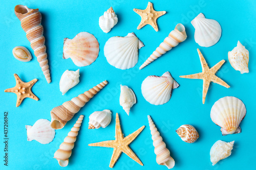 Set of various sea shells and starfishes on a blue background as a summer backdr Fototapet