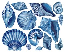Set Of Blue Seashells - Conch, Shell, And Cockle-shell. Sea Shells Watercolor Hand Drawn Illustration Set Isolated On White Background For Banner, Poster, Print, Postcard, Textile, Template, Card